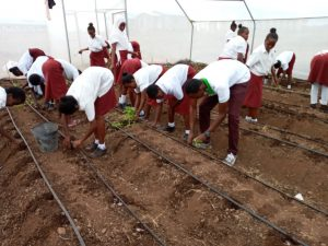 Loglogo Girls Marsabit Transplanting Tomatoes