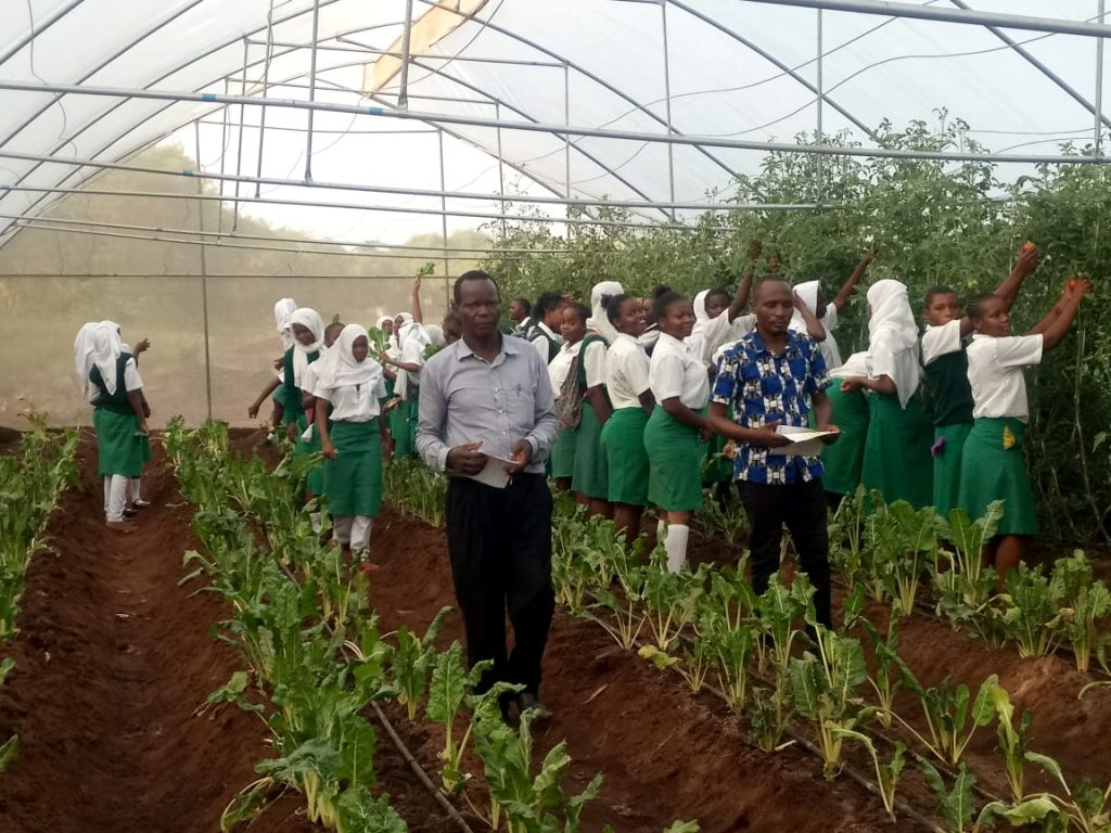 Matuga Girls Students Harvesting Tomatoes and Spinach